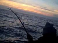 Tuna Fishing from Gordons Bay
