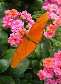 Butterfly World Oaarl