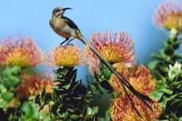 Birding at Harold Porter Botanical Garden | Betty's Bay