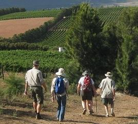 Guided Walks at Waterkloof
