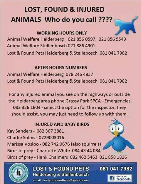 Numbers for lost, found & injured animals in the Helderberg