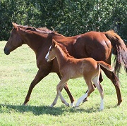Bookings open for Mares & Foals Farm Walk at Avontuur