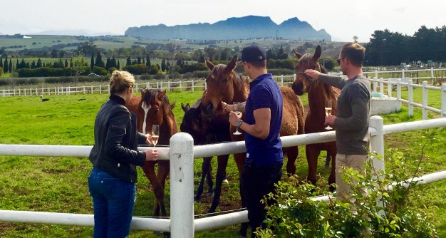 Public interaction with Avontuur's horses is a rewarding and special experience, which happens only a few times per year at the annual Mares and Foals Walk