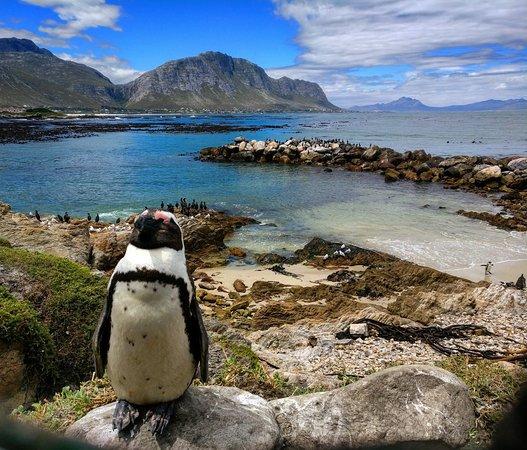 Stoney point Penguine