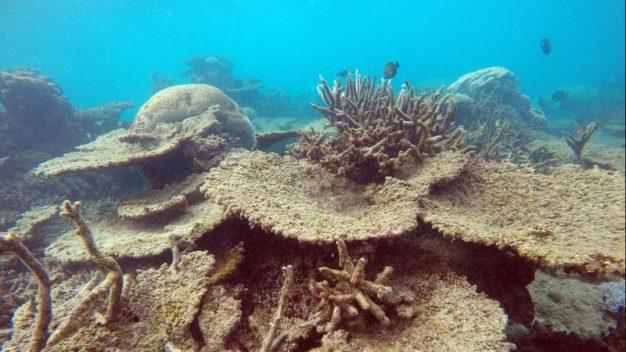 Coral Reefs in Ocean
