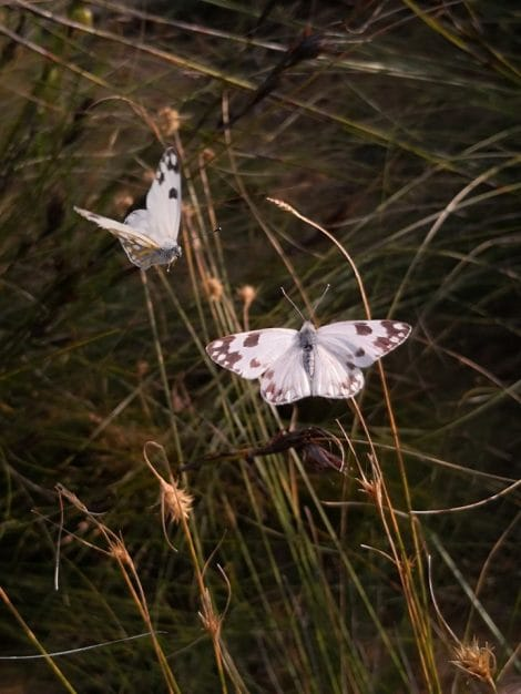 Fynbos & Butterfly Walk