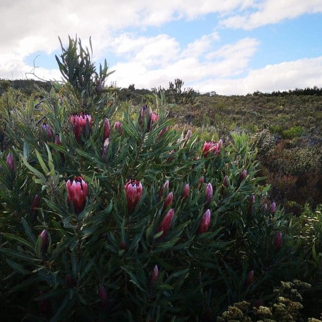 Fynbos Walk