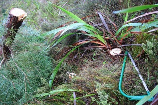 Hacks - Clearing Alien Vegetation