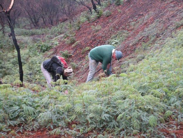 Hacks - Clearing Alien Vegetation September