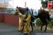 avontuur-horses031