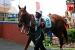 avontuur-horses032