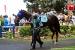 avontuur-horses033