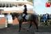 avontuur-horses034