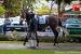avontuur-horses037