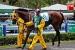 avontuur-horses040