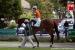 avontuur-horses043