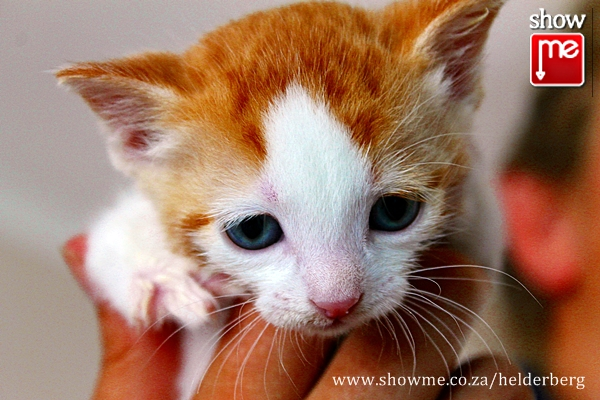 About Cats And Dogs Helderberg Centre