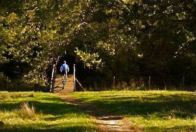 Forest area of Oak Valley Mountain Bike Trails