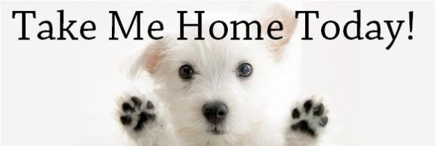 Take-Me-Home-626x211