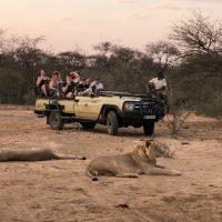 Khaya Ndlovu Lion