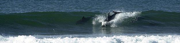 Jeffreys Bay Dolphins