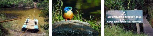 Half Collard Kingfisher Trail, Wilderness, Garden Route