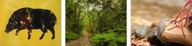 Terblans Hiking Trail, Knysna, Garden Route