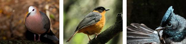 Birding, Nature's Valley, Garden Route