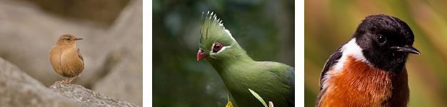 Birding, Wilderness, Garden Route