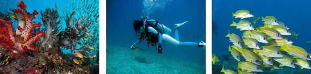 Diving Sites, Knysna, Garden Route