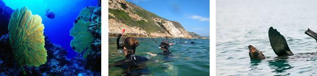 Diving Sites, Plettenberg Bay, Garden Route