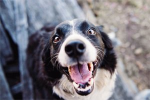 Tips for Keeping 'Man's Best Friend' Healthy