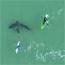 NSRI urgent safety shark warning 23 July 2020