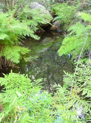 Idwala Hiking Trail tree ferns