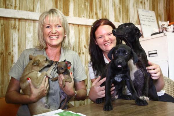 prolife pet rescue
