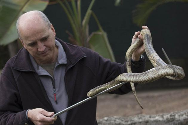 Jason Snakes of the Lowveld-69