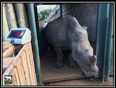 rhino-wyntir-weight-22-march