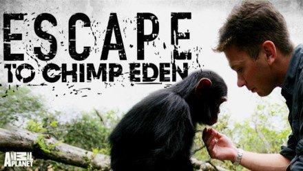 chimp-eden-440x248