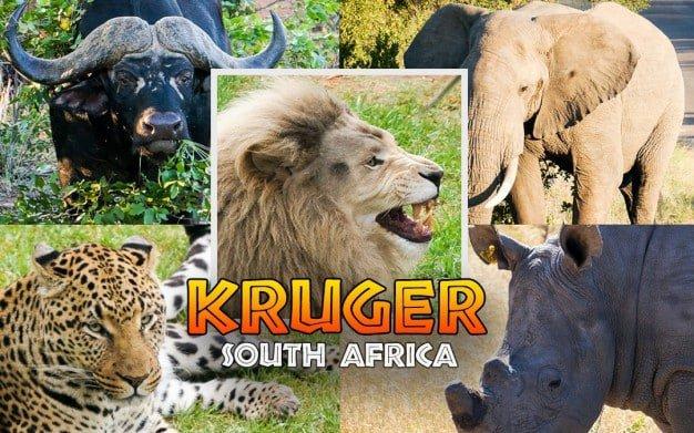 kruger-national-park-big-5-1080x675