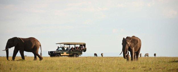 African Bush Travel in Mpumalanga