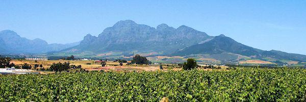Mountains & Vineyards of Paarl