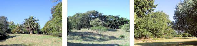 View of Trees