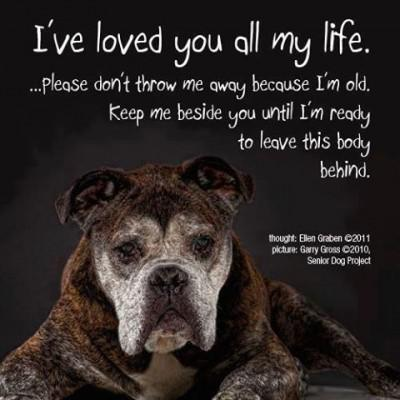 Older Dogs need Love too!