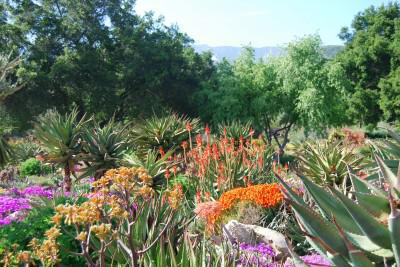 Indigenous plants tend to be most resistant to drought conditions Image source: palindromereporter.wordpress.com