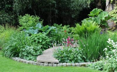 A boggy area can be converted into a charming garden feature. Image courtesy: ultimatechristoph.com