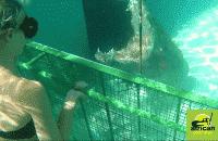 croc-cage-1