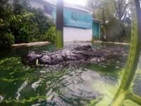 croc-cage-2