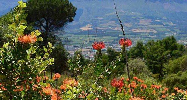 winelands-fynbos-vista-1
