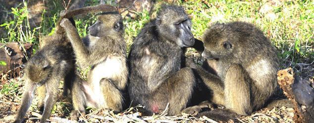Kruger Park May1 09 (2)