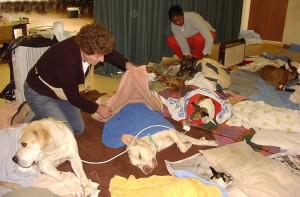 Some of the dogs lying in the recovery area after being spayed.